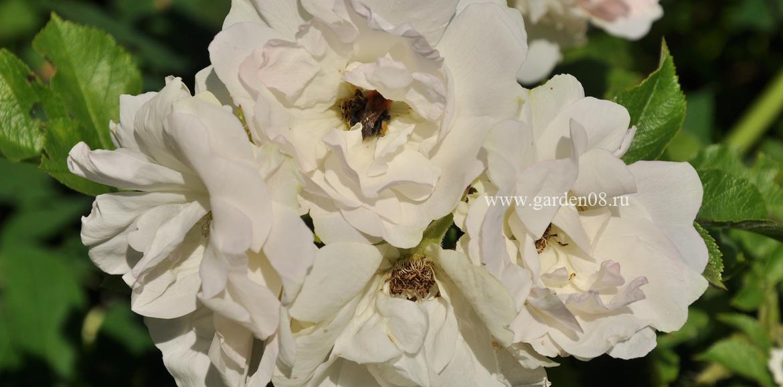 rose-garden08.ru