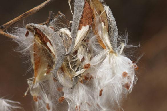 Семена многолетников