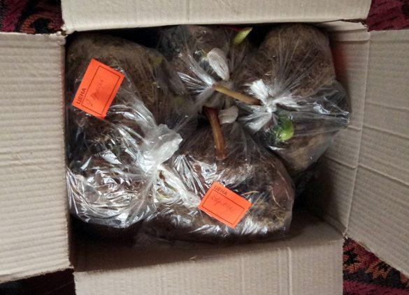 Заказ упакован в коробку